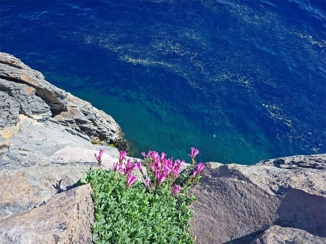 Flowers by Crater Lake