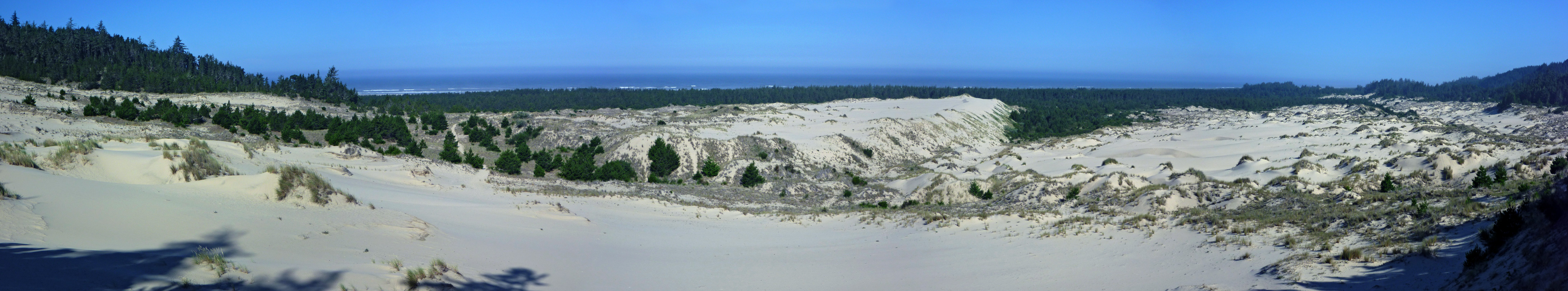 Dunes and forest near Tahkenitch Creek