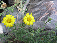 Black Canyon of the Gunnison wildflowers
