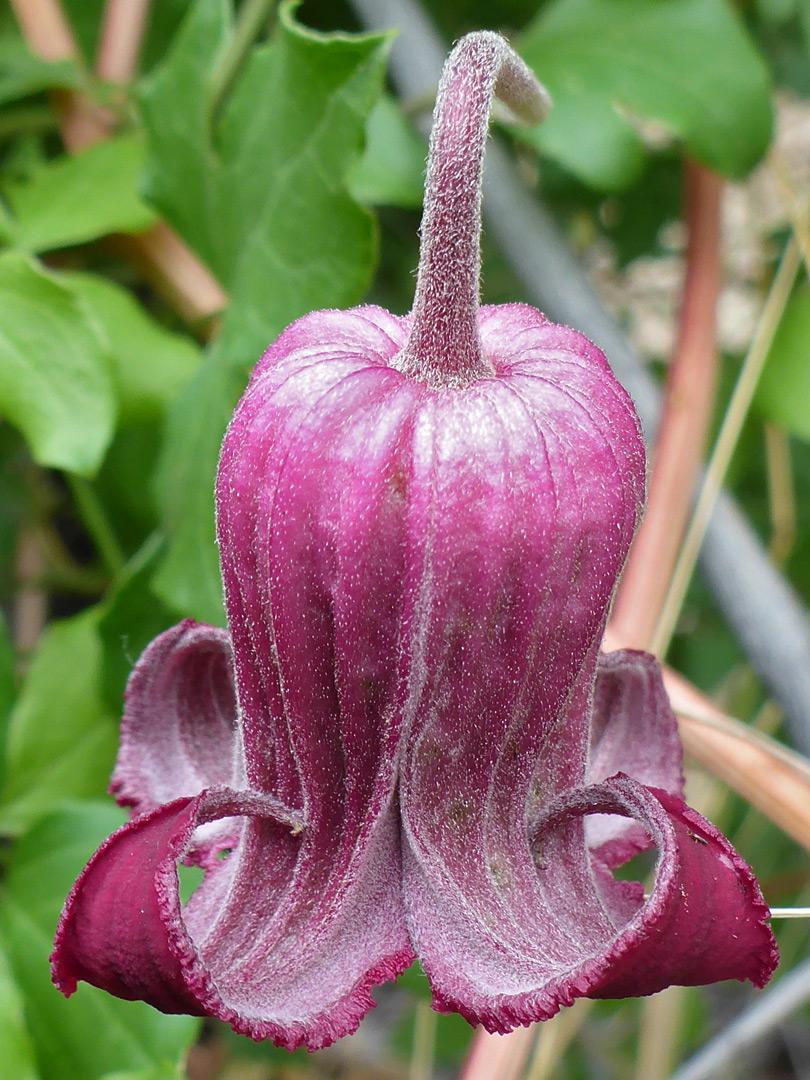 Bell Shaped Flower
