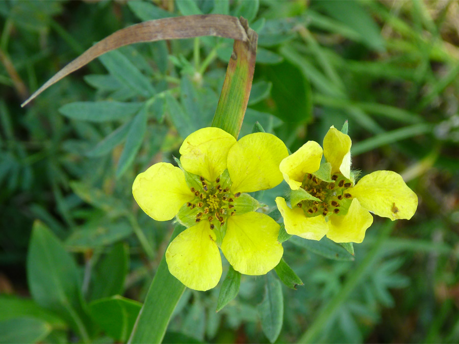 Yellow petals and green bracts
