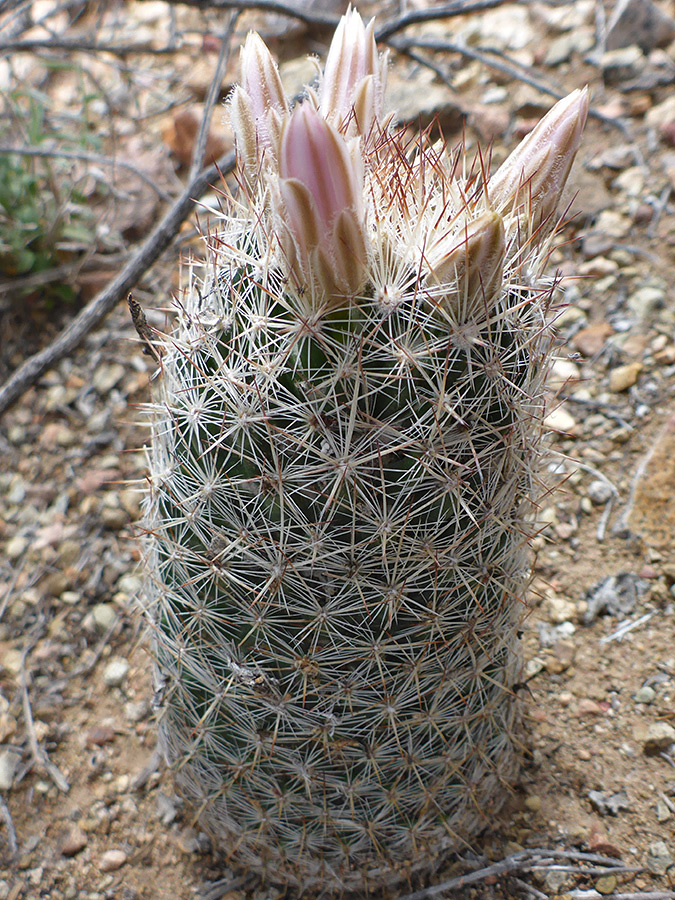 White spines