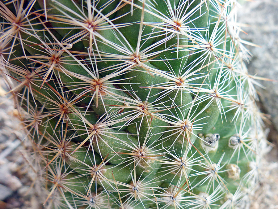 Spines and tubercles