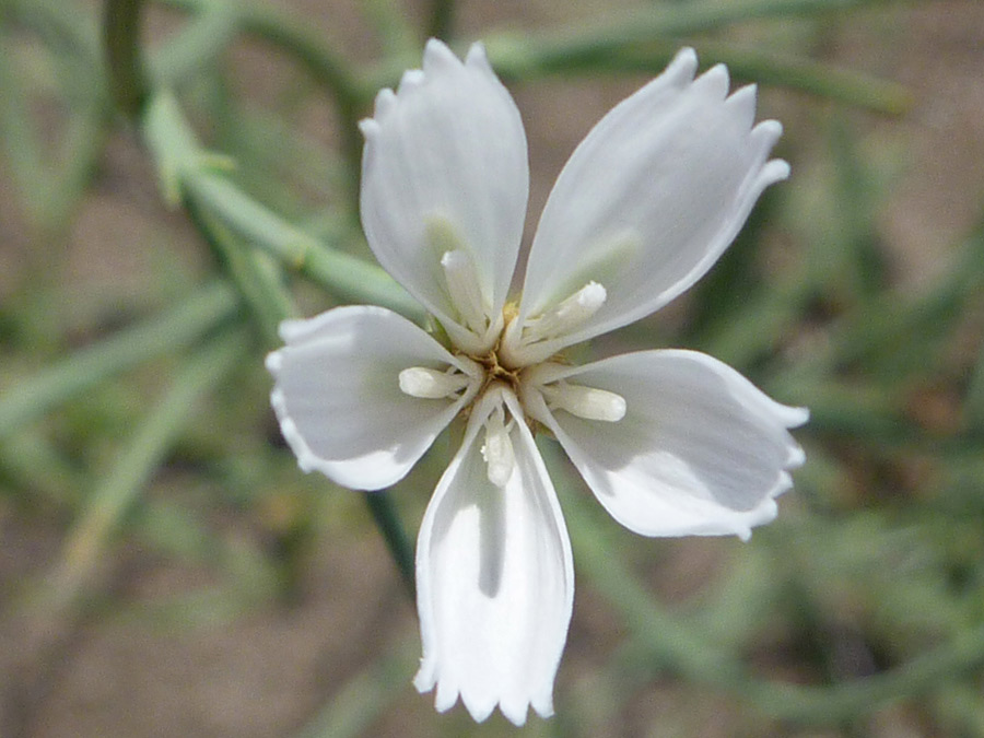 Immature flower