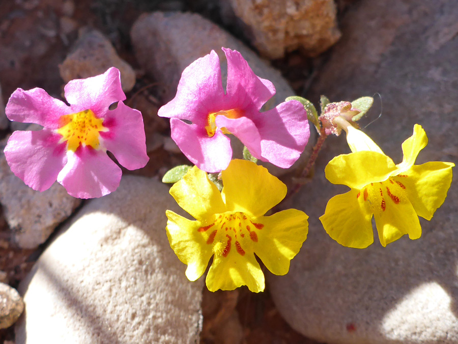 Pink and yellow flowers