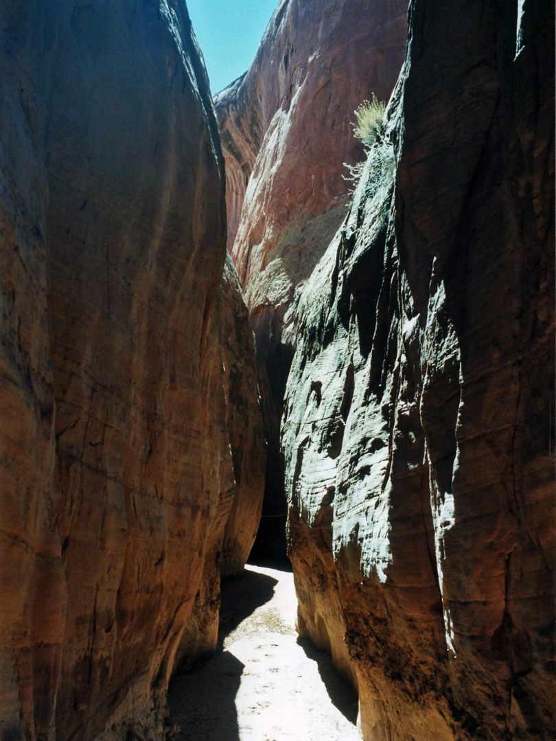 Sunny passage in Dry Fork of Coyote Gulch