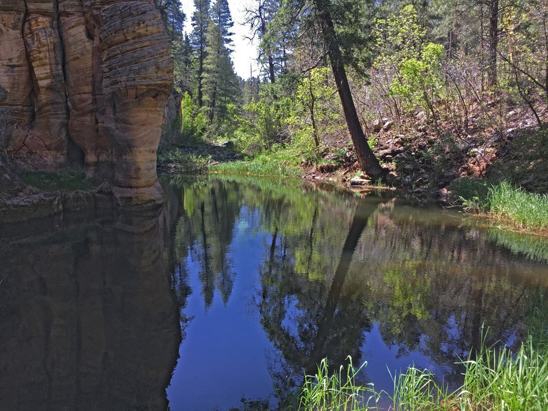 Reflections on a pool