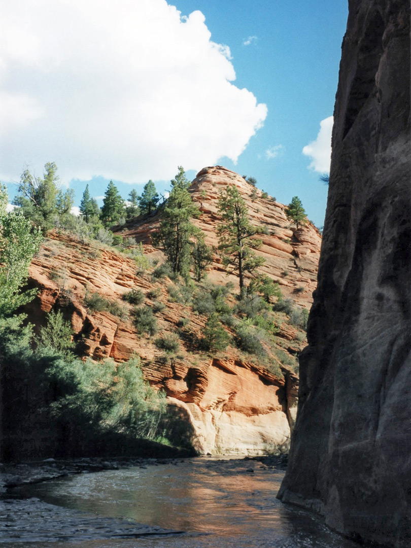 East Fork Of The Virgin River Mineral Gulch Utah
