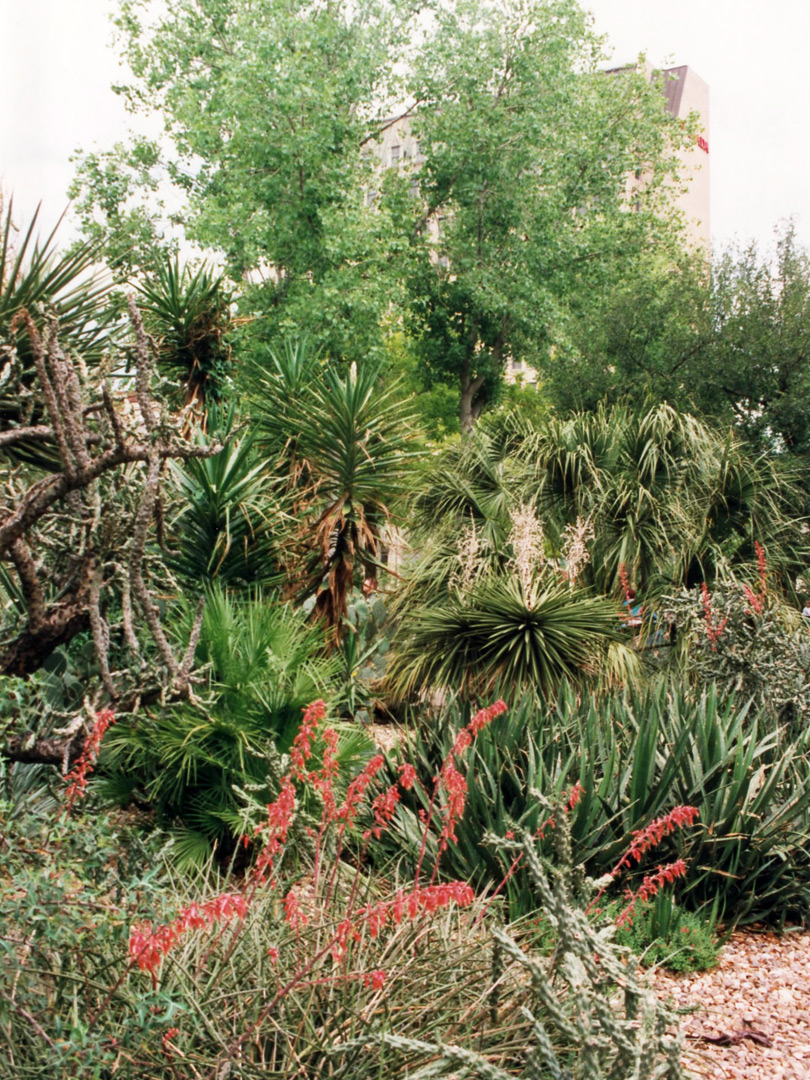 Plants in the Alamo gardens