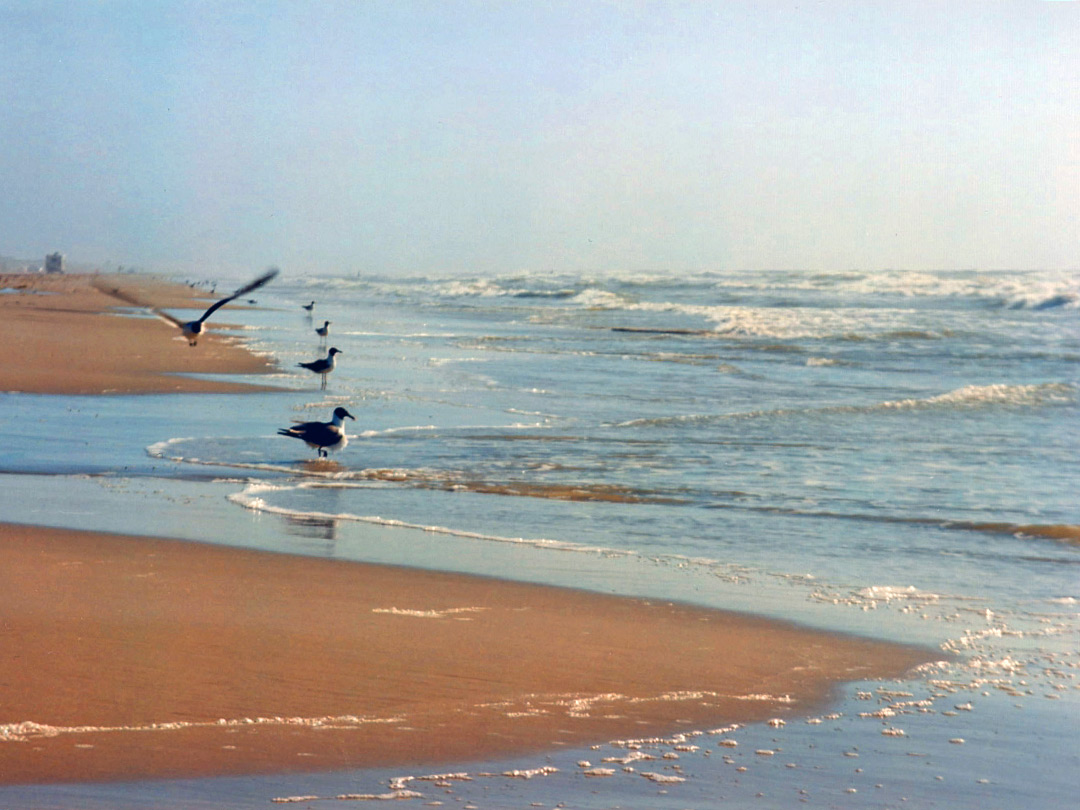 North Padre Island beach
