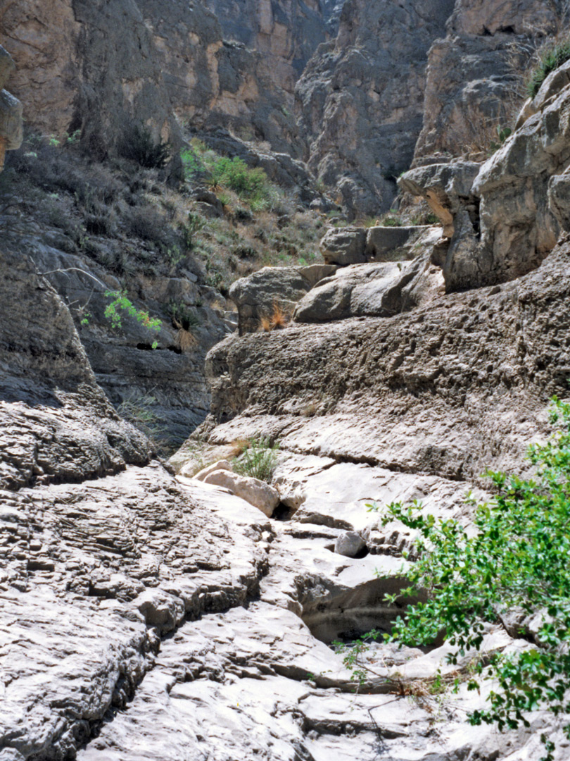 Tributary of Boquillas Canyon