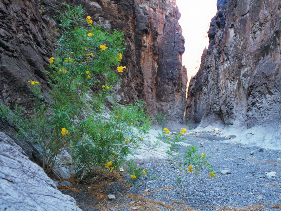 Flowers in Closed Canyon