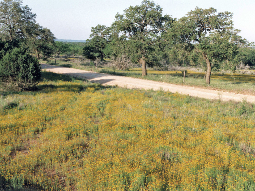 Back road along the Hill Country Trail (RR 1323)