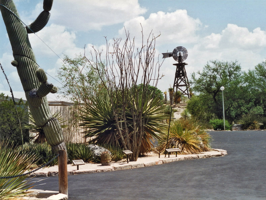 Cactus garden and the water tower