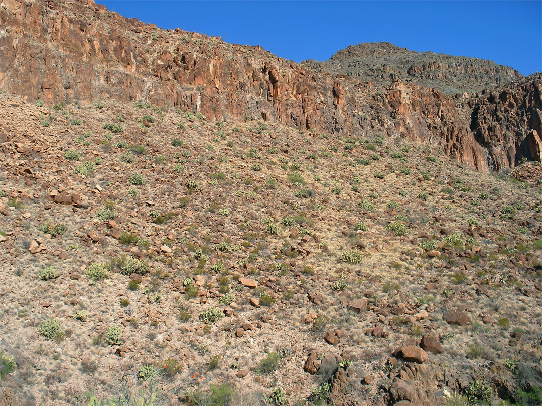 Cactus-covered hillside