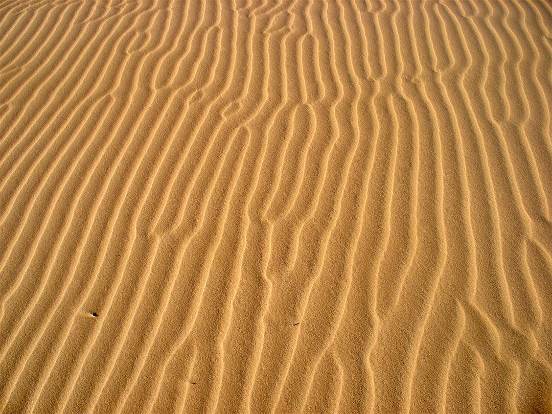 Ripples: Monahans Sandhills State Park, Texas