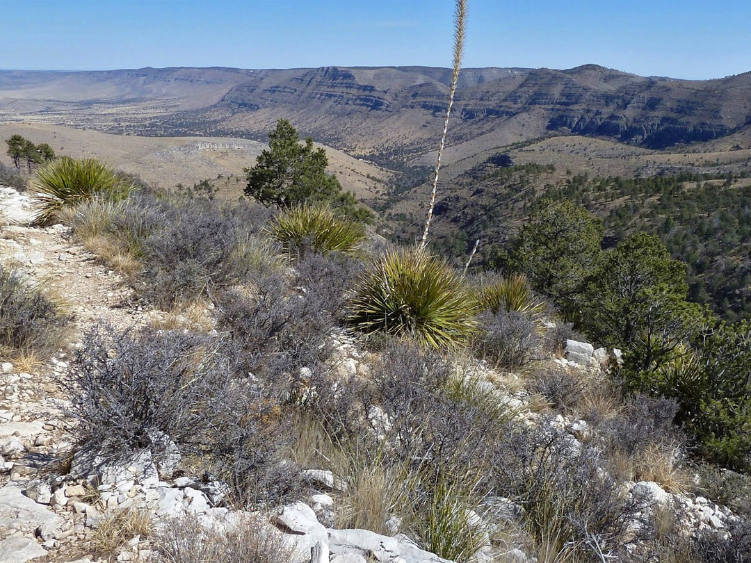 Upper end of Dog Canyon