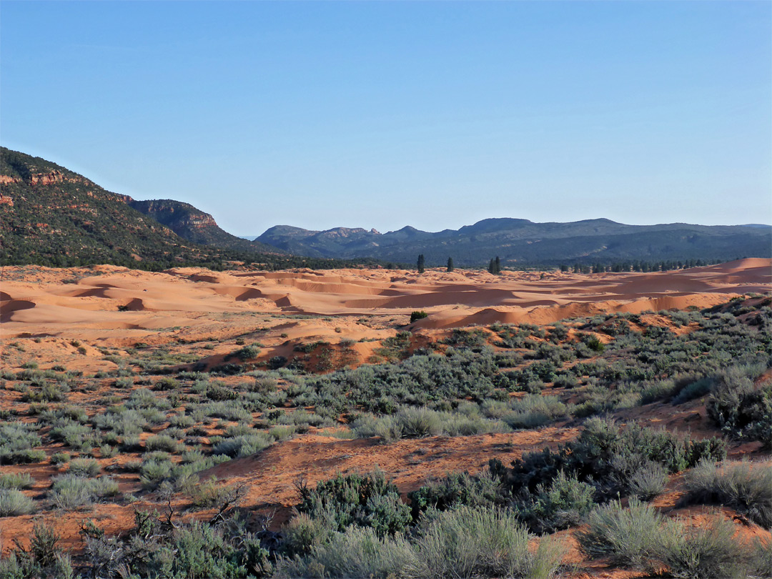 Sand and sagebrush