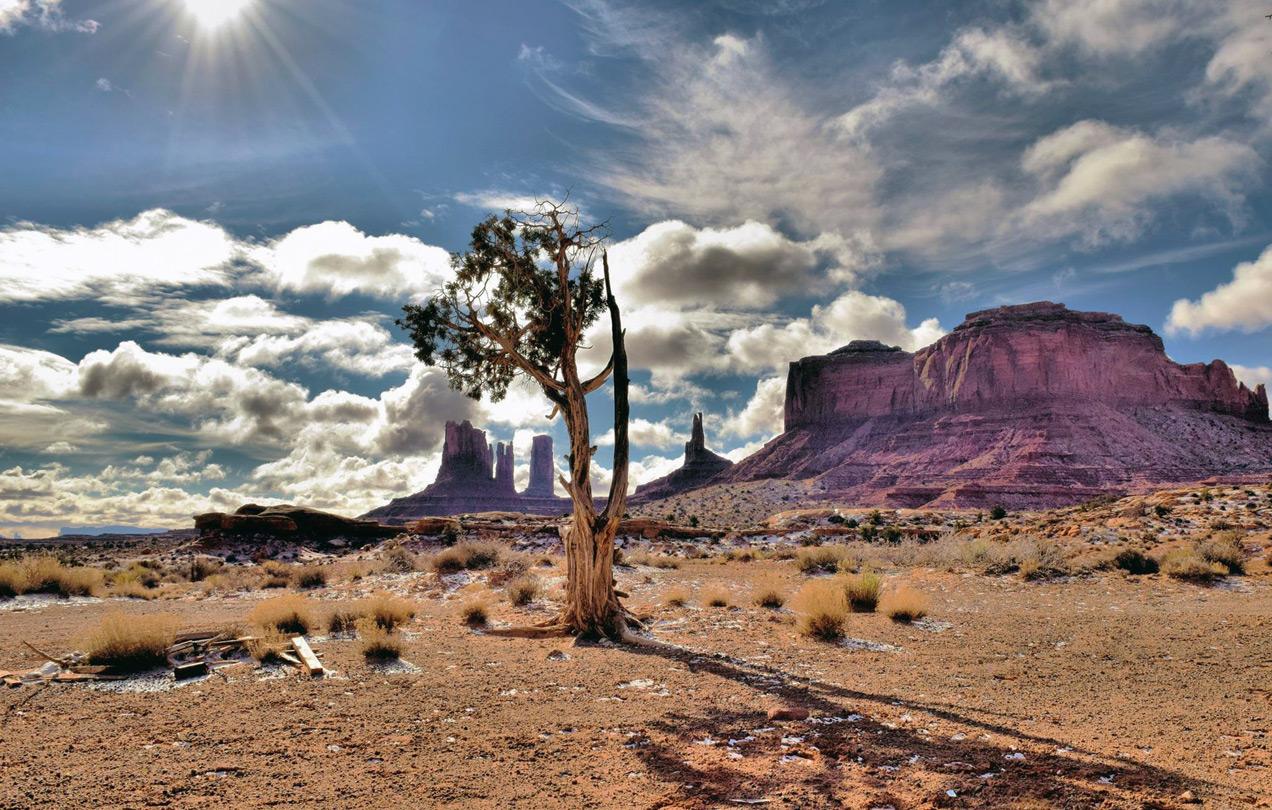 Lone Tree Monument Valley Utah