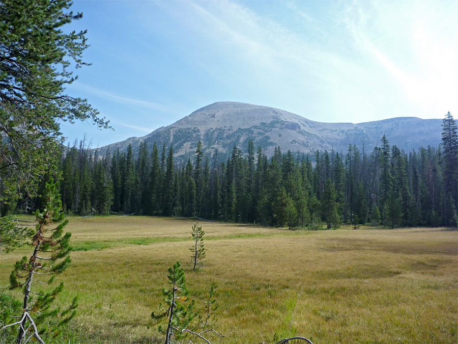 Meadow beneath Mount Agassiz