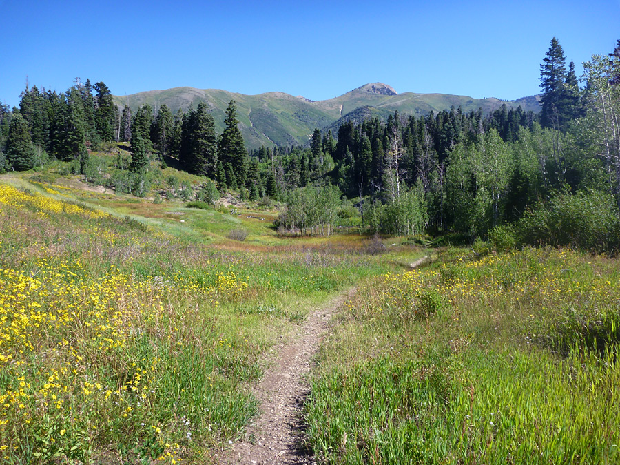 Path to the Payson Lakes