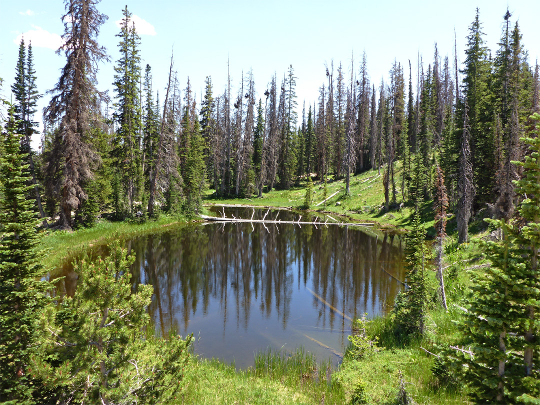 Reflections on a pond: Notch Mountain Trail, Uinta ...