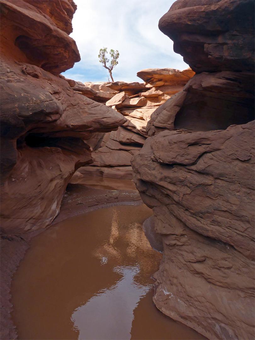 Steer Gulch Cedar Mesa Utah