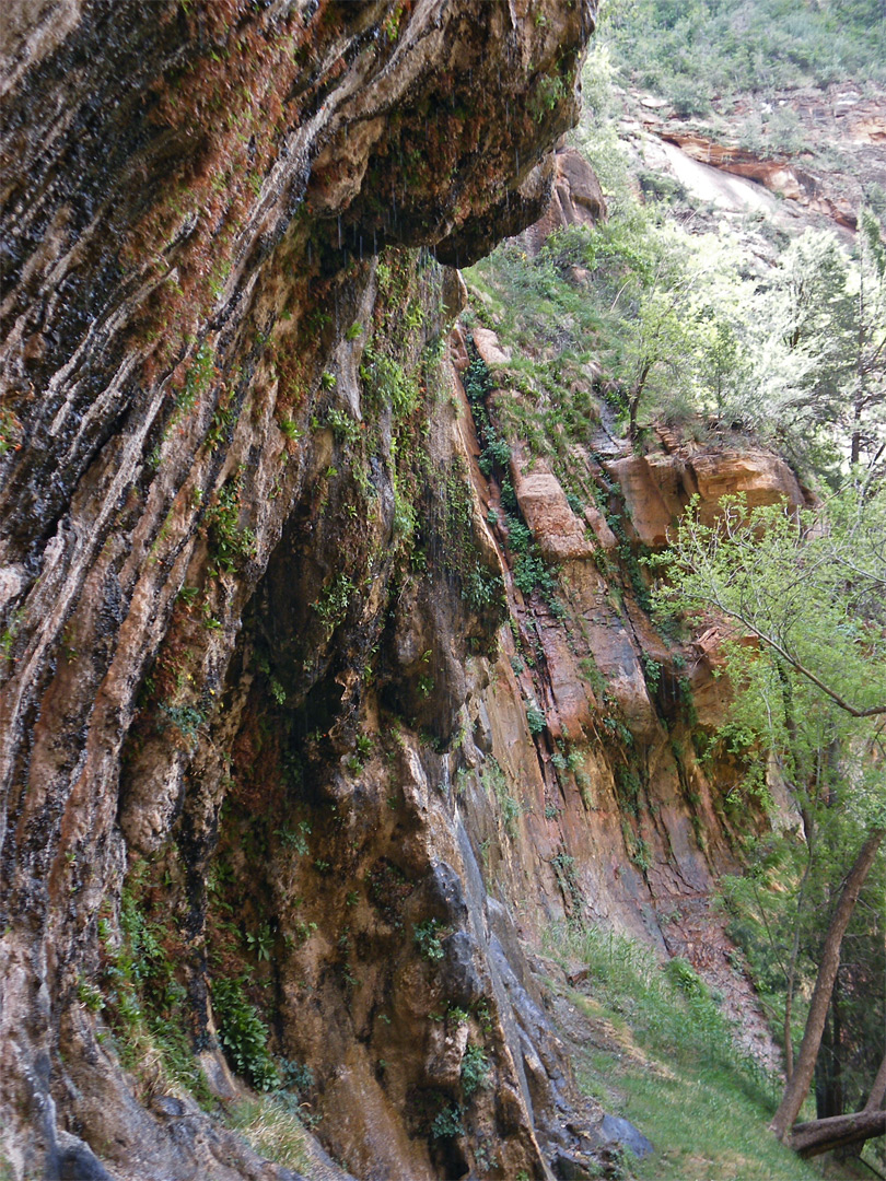 http://www.americansouthwest.net/utah/photographs700/weeping-cliff4.jpg