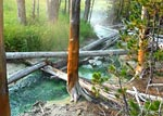 Video of Amphitheater Springs and Whiterock Springs