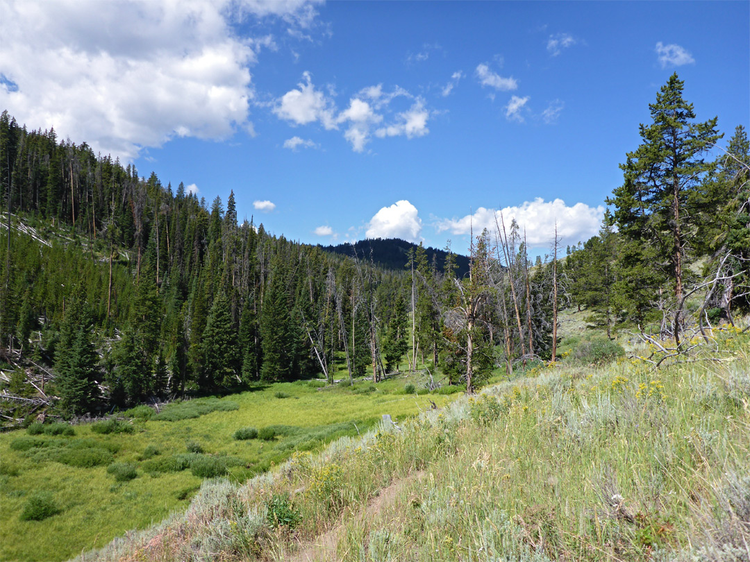 Meadow beside Glen Creek